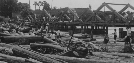 Picture by Morinosuke Tanaka. Teak logs piled up.