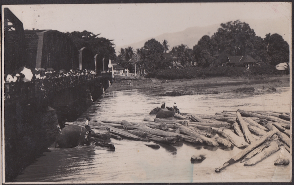Elephants moving logs in a river